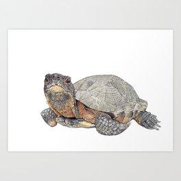 Wood turtle Art Print