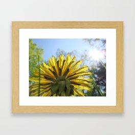 Summer Flower and Blue Sky Framed Art Print