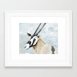 Gemsbok Framed Art Print