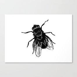 Drawing house-fly Canvas Print