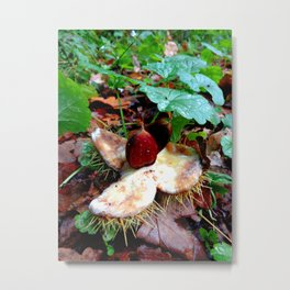 Chestnuts Metal Print