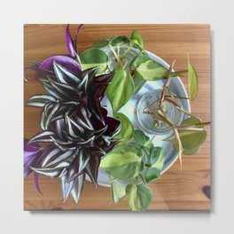 Growth and Balance - Plant Cuttings in Water Metal Print
