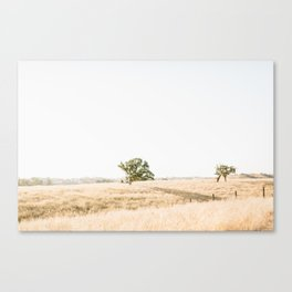 Los Olivos 2 Canvas Print