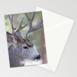 Watercolor Deer, Mule 04, RMNP, Concerning Thoughts Stationery Cards