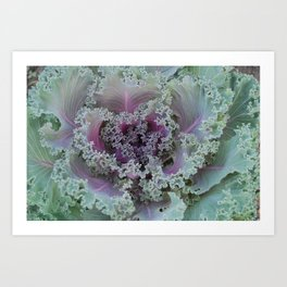 Cabbage Fractal Art Print