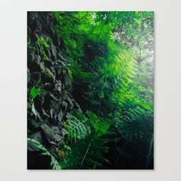 Rocks and Ferns Canvas Print
