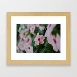 FLOWER  Framed Art Print