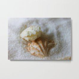 Seashells 1 Metal Print