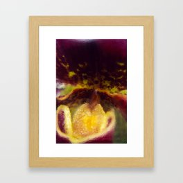 Painted Ladyslipper Orchid Framed Art Print