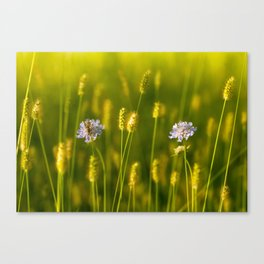 Flowery meadow and the bee Canvas Print
