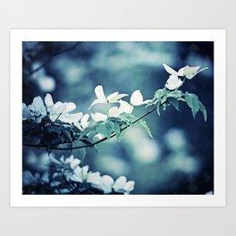 Navy Blue White Nature Photography, Dogwood Tree Branches, Dark Flower Floral Branch, Botanical Blue Art Print