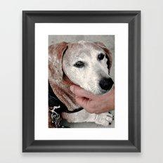 Portrait of a Dachshund Framed Art Print