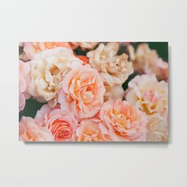 Light Pink Roses Metal Print