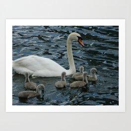 Mute Swan & Cygnets Art Print