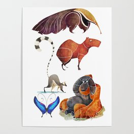 Rainforest animals Poster