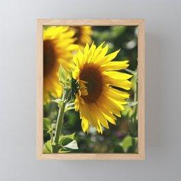 The German Sunflower Framed Mini Art Print