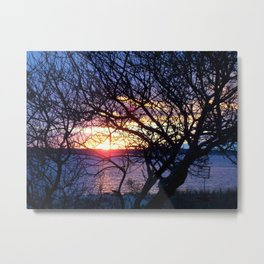 Sunset Through The Plum Bush Metal Print