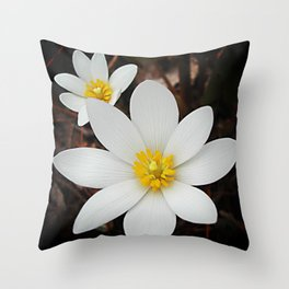 Spring woodland wildflower:  bloodroot, Sanguinaria Throw Pillow