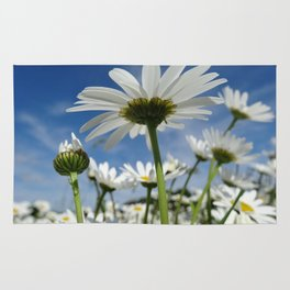 Daisy Flowers, Petals, Blossoms - White Green Rug