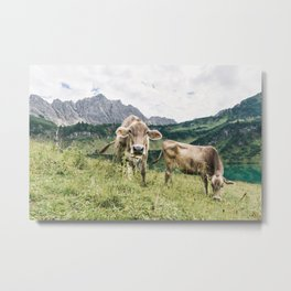 HAPPY COWS Metal Print