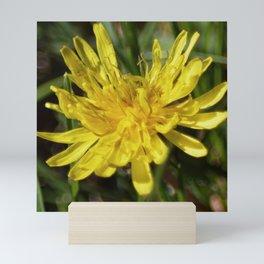 Dandelion Macro Mini Art Print