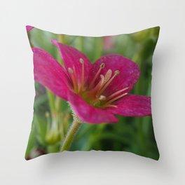 Saxifrage Flower Throw Pillow