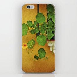 Window Box iPhone Skin
