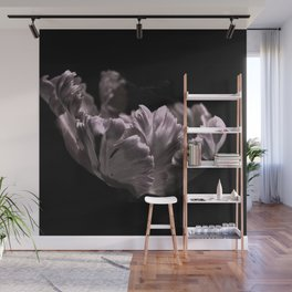 Pink Feather Tulip Flower Bloom on a Black Background Wall Mural