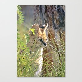 serval in grass Canvas Print