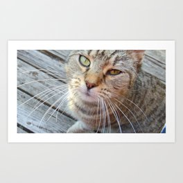 Cat Photography Art Print