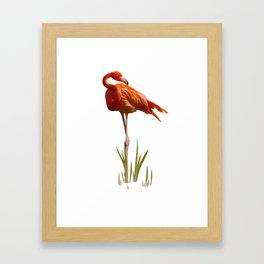 The Florida Flamingo Framed Art Print