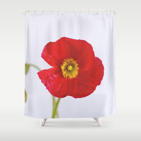 red poppy Shower Curtain by Life Through The Lens