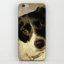 Zoey the Border Collie iPhone Skin