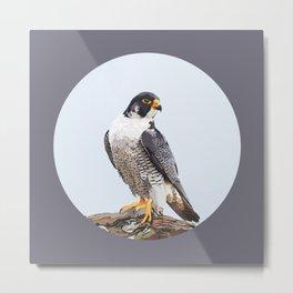 Majestic: Peregrine Falcon Metal Print