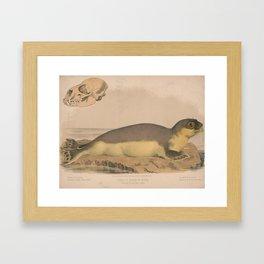 Vintage Illustration of a Harbor Seal (1874) Framed Art Print