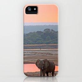 Walk in the evening light, Africa wildlife iPhone Case