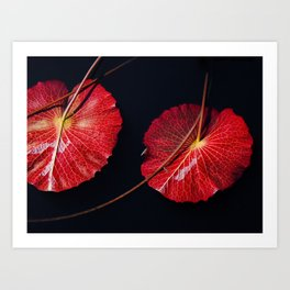 Nymphaea Scarlet Flame Lily Pad Leaves Art Print