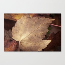 Winter leaf Canvas Print