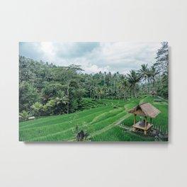 Ricefield in Ubud, Bali Metal Print