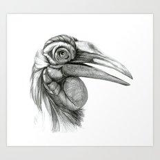 Southern Ground-hornbill SK044 Art Print