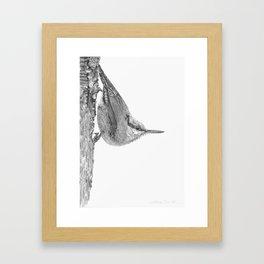 Friendly Nuthatch Framed Art Print