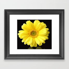 Yellow Petals Framed Art Print