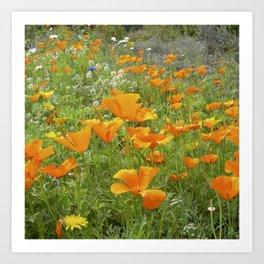 california poppy VIII Art Print
