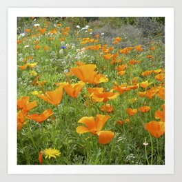 california poppy VIII Art Print