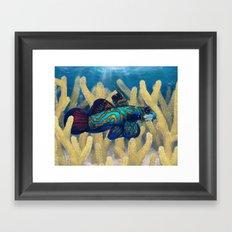 Mandarinfish Framed Art Print
