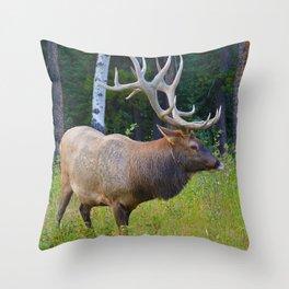 Bull Elk shows off his rack in Jasper National Park Throw Pillow