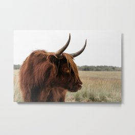 Wild Scottish Highlander cow in national park | Cattle in Nature | Veluwe park, the Netherlands | Travel photography Metal Print