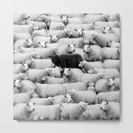 Different is 'Okay' Black Sheep of the Family black and white photograph Metal Print