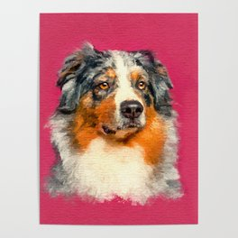 Australian Shepherd - Blue Merle Watercolor Digital Art Poster