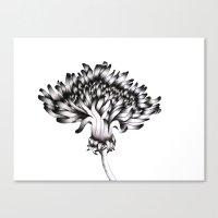 dandelion Canvas Prints featuring Dandelion by ECMazur
